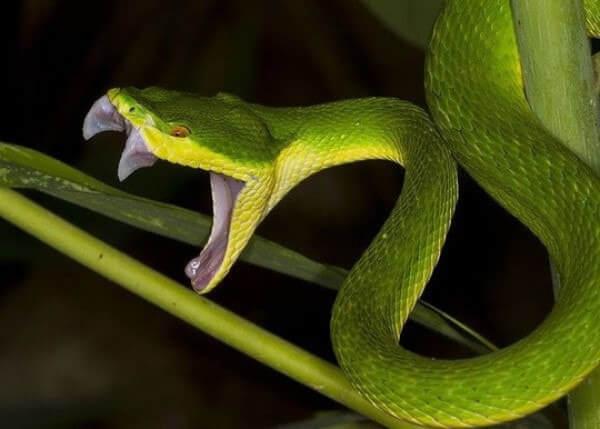 Mơ thấy rắn đánh con gì – số mấy? Là điềm LÀNH hay Dữ?