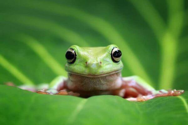 Nằm mơ thấy ếch là điềm báo gì? Con ếch số mấy là chính xác?