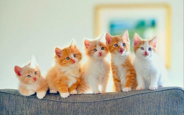Nằm mơ thấy con mèo số mấy? Báo hiệu điềm gì xắp sảy ra?
