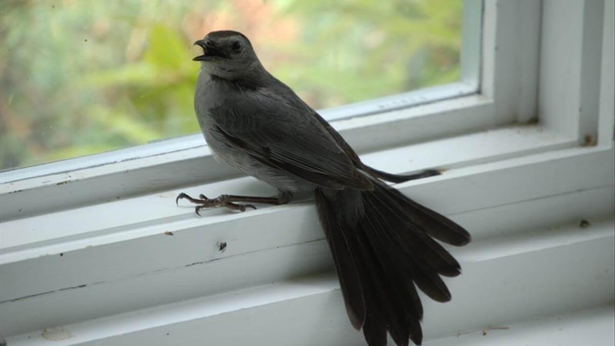 Chim bay vào nhà là điềm báo gì? Là điềm Tốt hay Xấu sắp xảy ra?