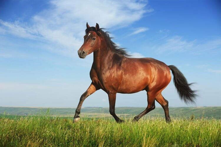 Con NGỰA số mấy? Mơ thấy Ngựa là điềm LÀNH hay DỮ?