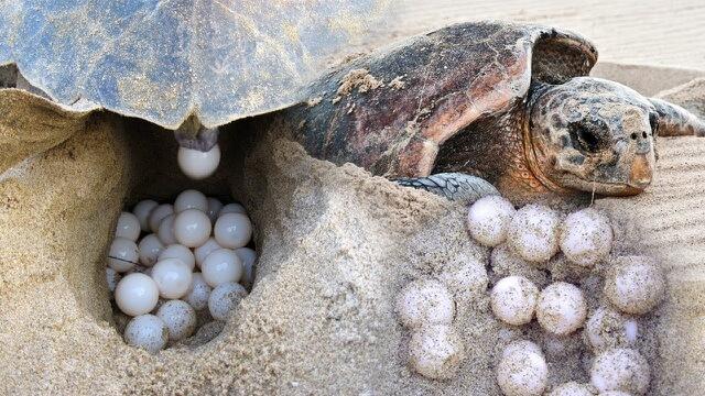 Con RÙA số mấy? Mơ thấy rùa là điềm LÀNH hay DỮ?